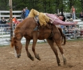 Bronc Riding at the 2013 Carney Roundup Rodeo